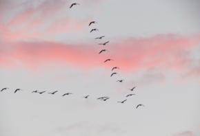 OutSystems implementeren in een vogelvlucht