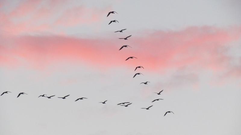 OutSystems implementeren in een vogellucht
